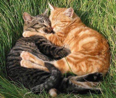 cuddlingcats